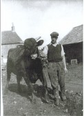 Agriculture in Witcham; 'Tom' the Bull, with Sidney Smith.