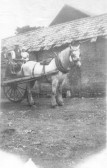 Horse and Cart at Witcham